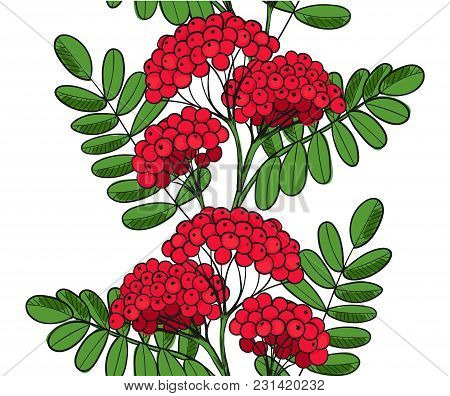Seamless Pattern Red Rowan Tree. Endless Ornament Twig Of Rowanberry Or Ashberry. Background Leaves