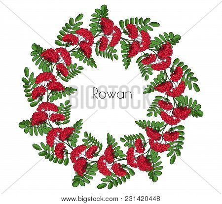 Wreath Red Rowan Tree. Ornament Twig Of Rowanberry Or Ashberry. Vector Decorative Element Circlet Le