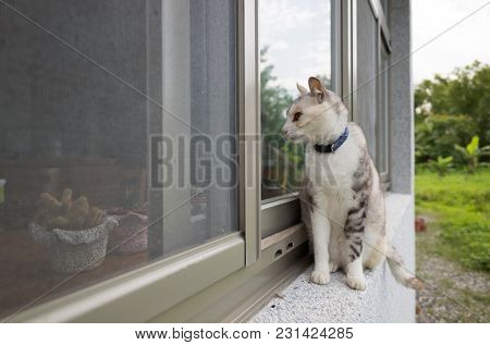 cats walk on the window in outdoor