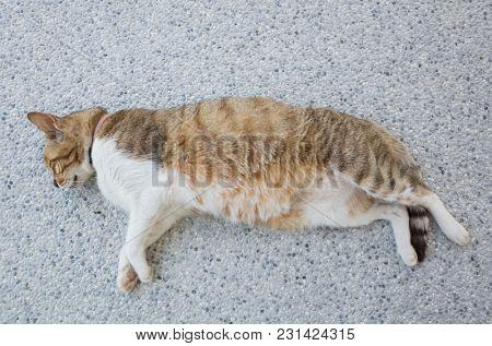 domestic cat sleep on the ground