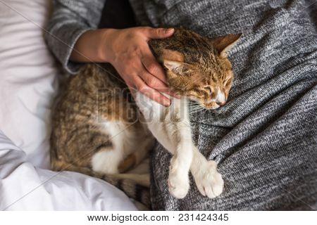 tabby cat sleep by a woman on bed
