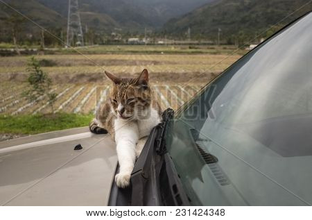 cat on a car in the outdoor
