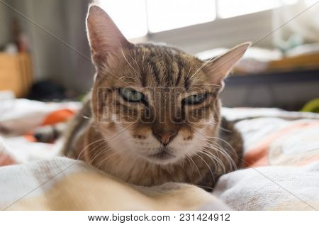 unhappy fat tabby cat look at you