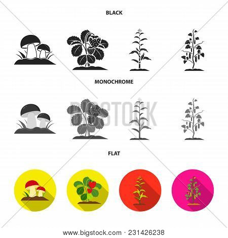Mushrooms, Strawberries, Corn, Cucumber.plant Set Collection Icons In Black, Flat, Monochrome Style