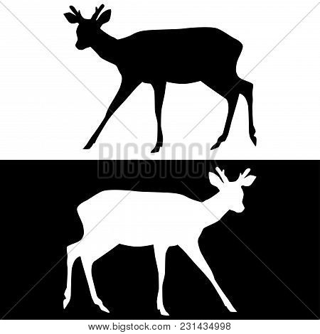 Sika Deer With Horns. Black And White Silhouettes. Vector Illustration Isolated On White Background