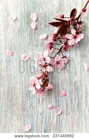 Spring flowers on wood background