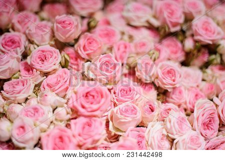 Macrophotography Of Top View Of Extremely Tender Pink Roses Arranged In A Beautiful Flower Compositi