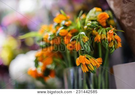 Macrophotography Of A Bouquet Consisting Of Tender Spring Orange Flowers Arranged In A Vase On The B