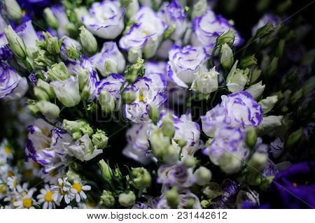 Macrophotography Of A Bouquet Consisting Of Tender Blue And White Flowers With Unopened Buds In A Fl