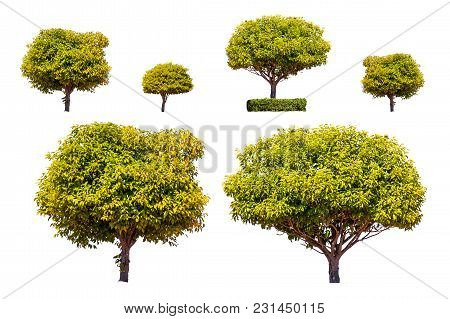 Tree Set Collection Isolated On White Background.collection Of Tropical Tree On White Background.