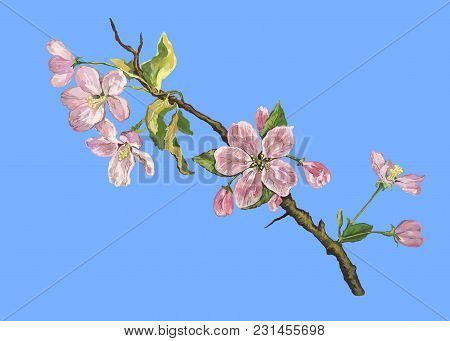 Blooming Apple Tree Branch Against The Blue Sky Made In The Picturesque Manner Of Impressionism
