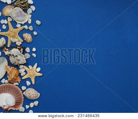 Flat Lay. Shells Of Various Kinds On A Blue Background. Seashells And Starfish On A Dark Blue Backgr