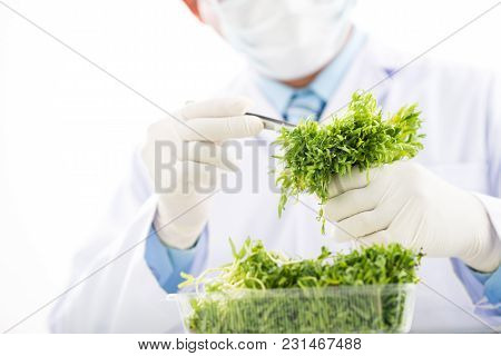 Close-up Shot Of Unrecognizable Scientist Wearing White Coat And Rubber Gloves Carrying Out Quality