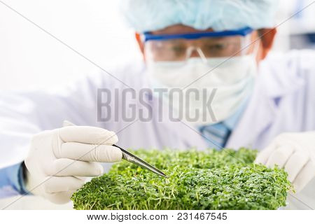 Close-up Shot Of Concentrated Biotechnologist Taking Sample Of Fresh Herbs For Analysis While Carryi