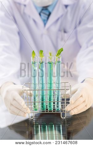 Close-up Shot Of Unrecognizable Researcher Wearing White Coat And Rubber Gloves Holding Test Tubes W
