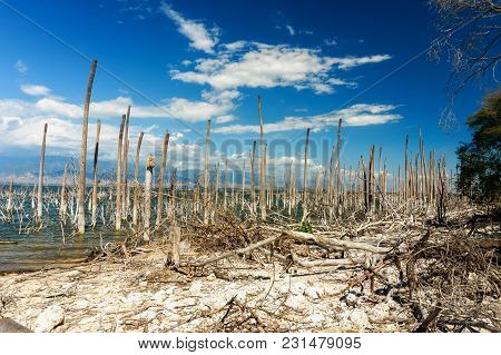 Salt Lake, The Trunks Of The Trees Without Leaves In The Water, Lake Enriquillo, Dominican Republic