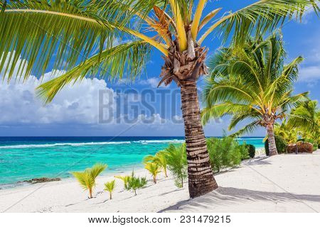 Palm trees overlooking tropical sandy beach on Roratonga, Cook Islands