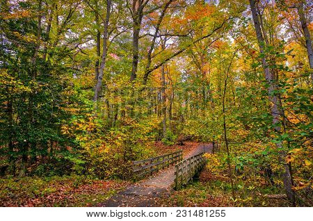 Old Wooden Walking Bridge Across A Small Stream In A Maryland Forest During Autumn With Fall Leaves