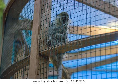 Poor Monkey In A Cage Turned Around