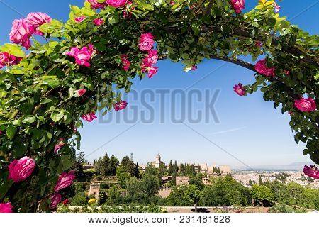 Granada, Spain - May 2017: Panoramic View Over Alhambra Palaces Through A Rose Bush