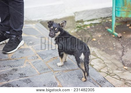 Sad Puppy On The Street Near Human Legs