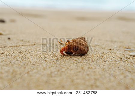 Hermit Crab On The Sandy Beach Close-up