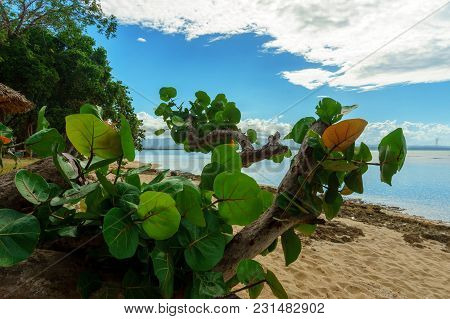 Green Deciduous Caribbean Plants On Wild Sandy Beach Background, Nature Reserve, Natural Reserve, Na