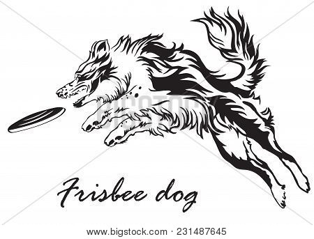 Vector Monochrome Illustration With Dog (border Collie) Isolated On White Background. Fluffy Black A