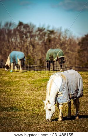 Three Horses, Covered For Cold Weather, In A Virginia Field Grazing In The Morning Sun.