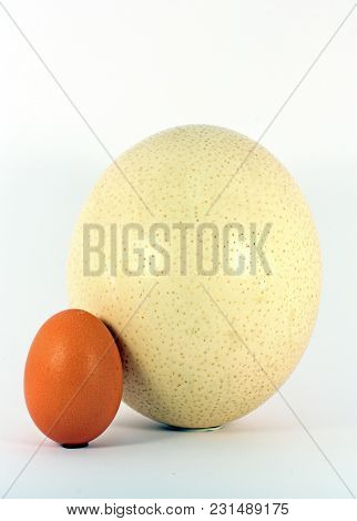 Chicken And Ostrich Eggs Isolated On White