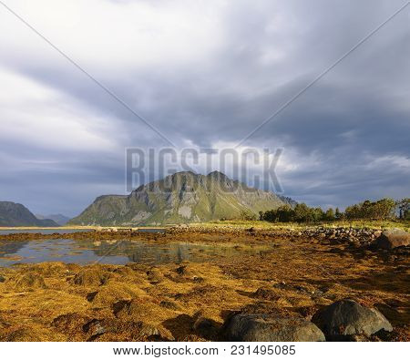 Scenic Fjord On Lofoten Islands With Towering Mountain Peaks, And Dramatic Sky And Yellow Algae In F