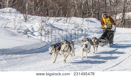 Kamchatka, Russia - February 42, 2017: Traditional Kamchatka Dog Sledge Race Elizovsky Sprint
