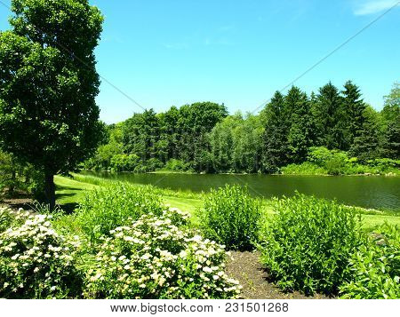 Lush Green Summer Landscape With Lake And Trees