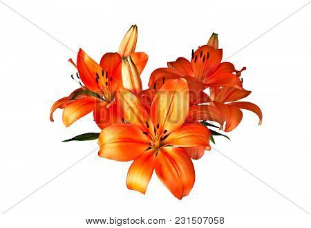Orange Lily, Hemerocallis Lilium Bulbiferum, Isolated On White Background