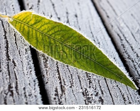 A Frost-lined Leaf On A Frost-covered Bench.