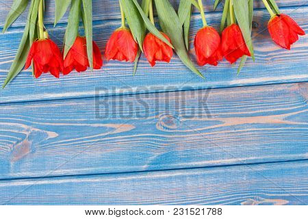 Fresh Red Tulips For Different Occasions Lying On Blue Boards, Spring Decoration, Copy Space For Tex