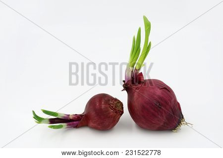 Two Red Onion Isolated On White Background.