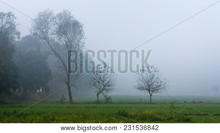 Trees Covered With Mist On A Foggy Morning, Punjab, India