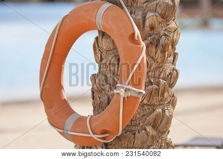 Orange Plastic Life Buoy Weighs On A Trunk Of A Palm Tree On A Pool Background