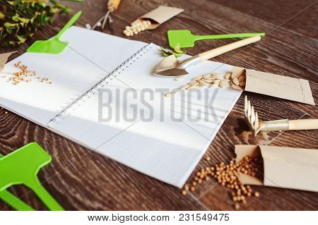 Spring Garden Preparation For Sowing Vegetable Seeds And Planning. Pumpkin, Coriander With Labels, P