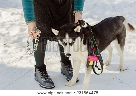Woman Trying To Wear A Metal Collar On Her Dog