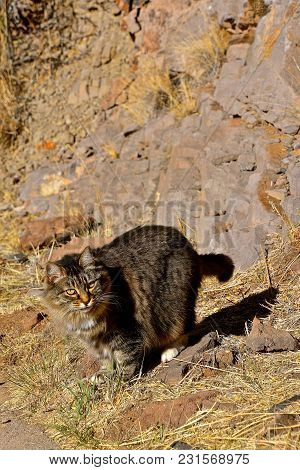A Lone Cat Is Found In The Background Of Rocks And Dried Straw And Grass.