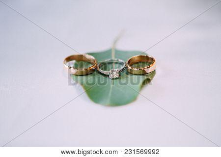 Wedding Rings On A Green Sheet Of Eucalyptus