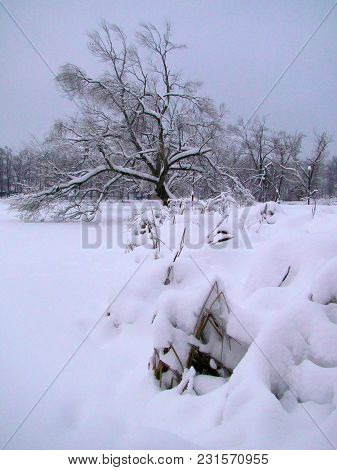 Landscape With A Tree After Heavy Snowfall In Winter