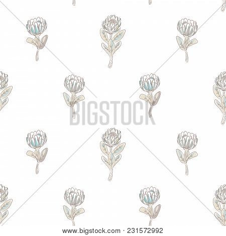 Protea Flower Seamless Vector Pattern. Simple Floral Background.