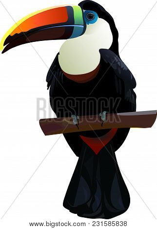 Realistic Toucan Icon Isolated On White Background