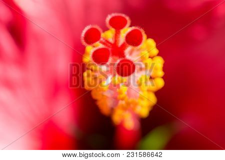 Blurred Floral Background With Hibiskus Red Flower. Macro Stock Photo With Selective Focus Point And