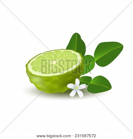 Isolated Colored Green Half Of Juicy Bergamot, Kaffir Lime With Green Leaves, White Flower And Shado