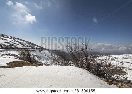A Landscape Of Leafless Trees In Snow Covered Mountains In The North Of Israel