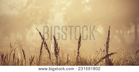 Meadow Grass Against The Background Of Trees In The Fog. Spring Season. Panoramic And Web Banner For